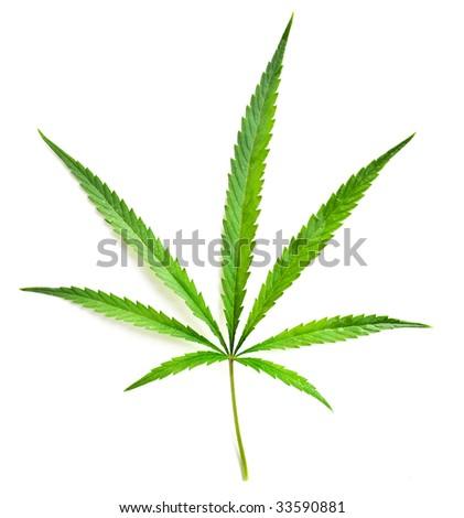 Marijuana over white - stock photo