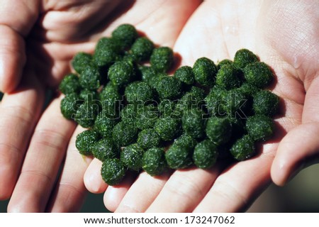 Marimo  or Moss ball