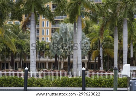 Marina resort in Cape Coral, palm alley, Florida - stock photo