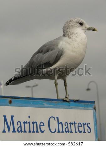 Marine Charters by seagul in Helsinky, Finland. - stock photo