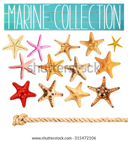 Marine clip-art collection of sea stars isolated on white.
