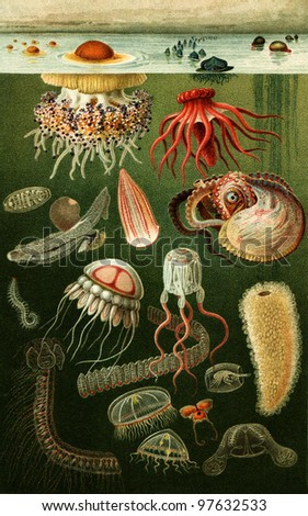 marine fauna - an illustration of the encyclopedia publishers Education, St. Petersburg, Russian Empire, 1896 - stock photo