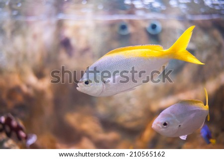 Marine fish in aquarium. - stock photo
