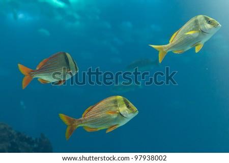 Marine fishes - stock photo