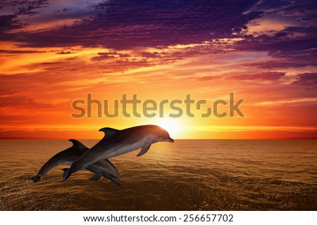 Marine life background - jumping dolphins, beautiful red sunset on sea - stock photo