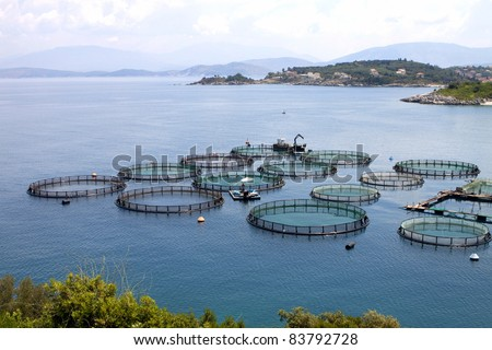Marine open water fish farm