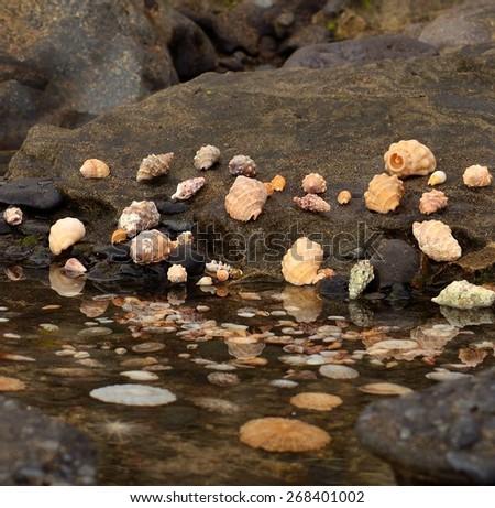 Marine shells on the shore  - stock photo