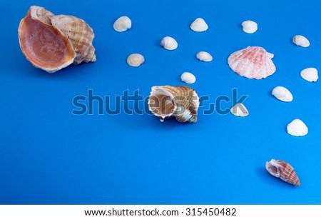 Marine snails and shells - stock photo