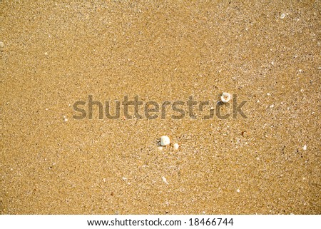 Maritime pebble on the beach