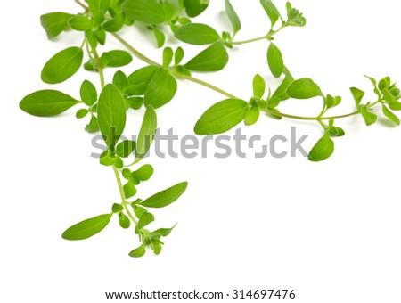 marjoram isolated on white - stock photo