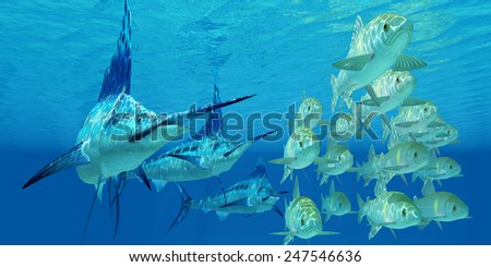 Marlin attack Ayu Fish - A school of ocean Ayu fish try to escape from three carnivorous Blue Marlin fish. - stock photo