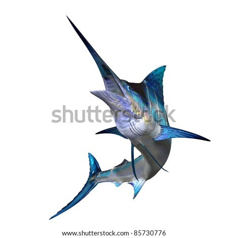 Marlin 01 - Marlins are carnivorous fish with an long body, a sail like dorsal fin and a spear shaped bill. It is found throughout tropical waters of the oceans. - stock photo