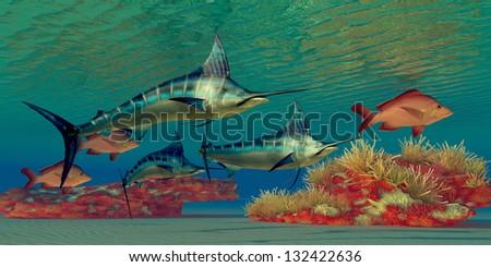 Marlin Reef -  - stock photo