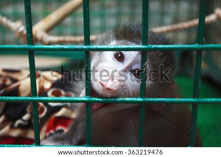 Marmoset in a zoo cage