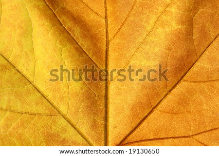 Marple leaf background
