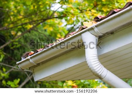Marple leaves in gutter, fall time, horizon format - stock photo