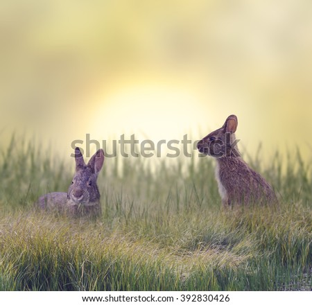 Marsh Rabbits Eating Green Grass - stock photo