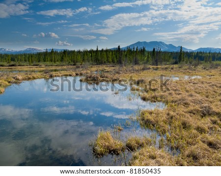Marshland pond in boreal forest (taiga) of Yukon Territory, Canada, reflecting blue partly clouded sky. - stock photo