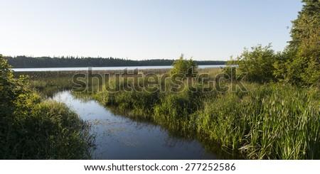 Marshland, Wasagaming, Riding Mountain National Park, Manitoba, Canada - stock photo