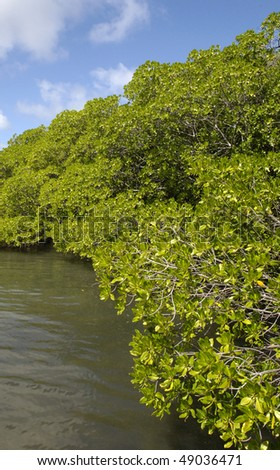 Martinique, France, mangrove at presque-isle of Caravelle