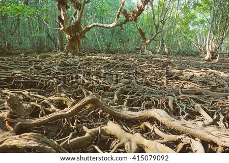 Marvelous of many roots with mangrove forest in nature, Ban Tha Ranae at Trat,Thailand  - stock photo