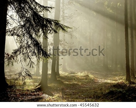 Marvelous scenery of the coniferous forest at the end of autumn. - stock photo
