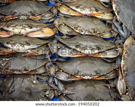 Maryland blue crabs stacked together a fish market. - stock photo