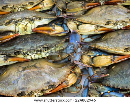 Maryland blue crabs waiting at seafood market. - stock photo