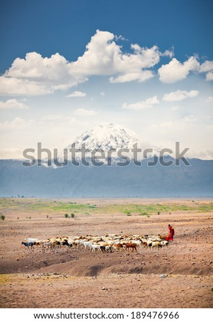Masai herders  herd  in savannah with a snow covered Mount Kilimanjaro in the background. Tanzania. Africa. - stock photo