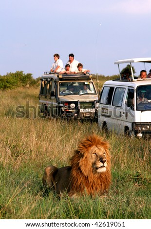 MASAI MARA - JUNE 22: Picture of some tourists in a car looking a lion during a typical day of a safari on June 22, 2007 in Masai Mara, Kenya. - stock photo