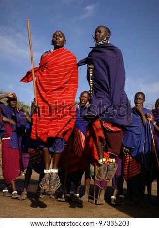 MASAI MARA,TANZANIA, AFRICA- MARCH 5: Masai warriors dancing traditional jumps as cultural ceremony, review of daily life of local people. Masai Mara National Park Reserve, March 05 , 2009, Tanzania - stock photo
