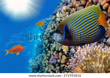 Masked Butterfly Fish and coral reef, Red Sea, Egypt. - stock photo