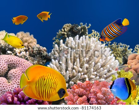 Masked butterfly fish (Chaetodon semilarvatus) and coral reef - stock photo