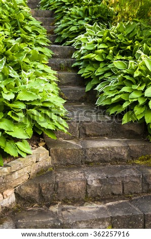massive stone stairs surrounded with funkia and hosta flowers in the country garden - stock photo