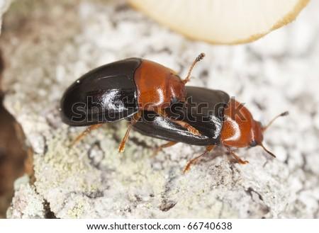 Darkling Beetle Neon Sign