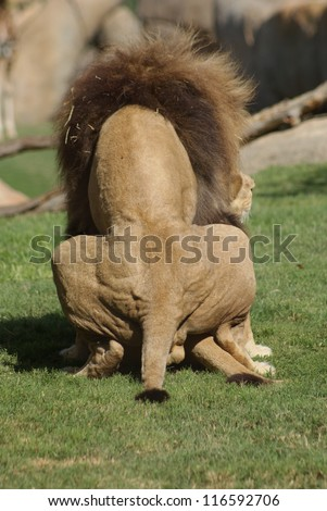 Animal Intercourse Stock Photos, Images, & Pictures ...