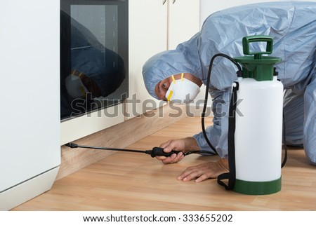 Mature exterminator spraying pesticide on wooden cabinet of kitchen - stock photo