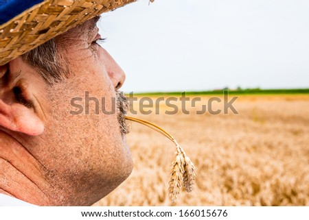 Mature farmer looking and worries about his crop. - stock photo