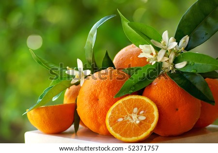 Mature orange and flowers.