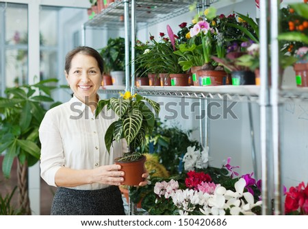 mature woman with  Aphelandra plant   at flower shop - stock photo