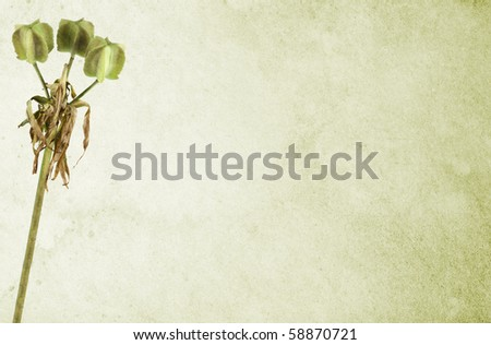 Matured lily over light green stained background. Soft canvas texture. Copy-space. - stock photo