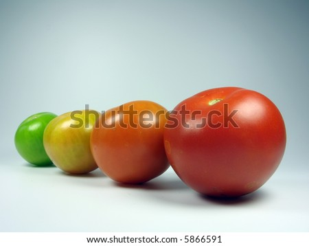 Maturing tomatoes - stock photo