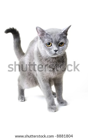 mauzkilla - stock photo