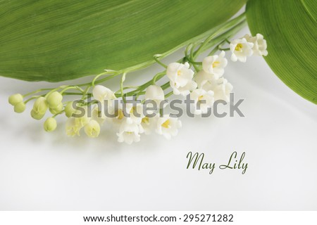 May Lilly lily of the valley  - stock photo