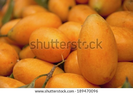 Mayongchid Maprang Marian Plum and Plum Mango at  thailand - stock photo