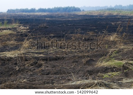 Meadow after fire - stock photo