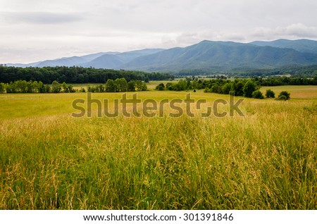 Meadow at Great Smoky Mountains National Park - stock photo