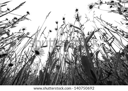 meadow - black and white picture, silhouettes - stock photo