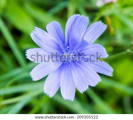 Meadow flower on a background of grass - stock photo