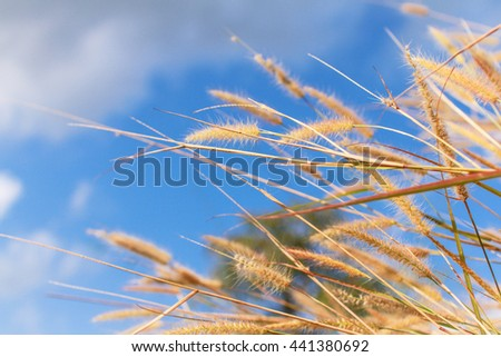 meadow flowers in blue sky day, grassland  - stock photo